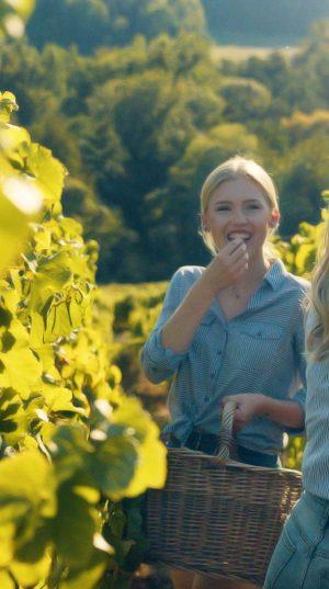 photo alsace vignes steve maire nolimits cleebourg raisin vin shooting portrait paysage cliché seance